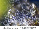 Dew Drops On Spider Web As A...