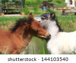 Two Mini Horses Falabella...