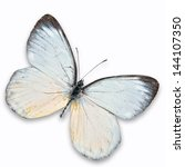 Stock photo white butterfly flying isolated on white background 144107350