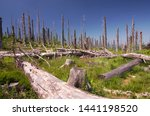 Dead Trees In The Bavarian...
