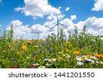 Flowering Meadows  Flowering...