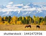 Magnificent Autumn Landscape...