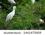 Wild Birds Community In Medan ...
