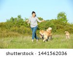 Stock photo young woman walking her adorable akita inu dogs in park 1441562036