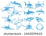 Graphical Color Set Of Sharks...