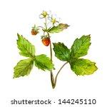 Watercolor Strawberry Bush