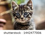 Stock photo porttrait of a young tabby cat 1442477006