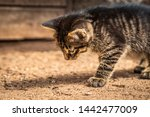 Stock photo porttrait of a young tabby cat 1442477009