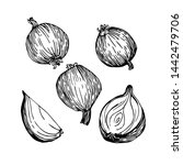 freehand line hand drawn ink....   Shutterstock .eps vector #1442479706