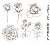 hand drawn rose flowers vector...   Shutterstock .eps vector #144249619