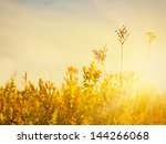 golden evening on the meadow ... | Shutterstock . vector #144266068