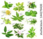 collection of fresh aromatic... | Shutterstock . vector #144270430