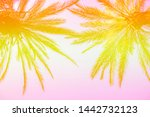 Silhouette Of Palm Trees With ...