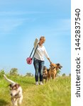 Stock photo dog sitter walks with many dogs on a leash dog walker with different dog breeds in the beautiful 1442837540