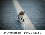 Stock photo a small sick kitten sitting on the road such cats in large numbers live on the mediterranean coast 1442843159