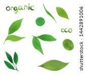 watercolor set of simple green... | Shutterstock . vector #1442891006