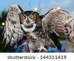 Great Horned Owl Ready To Fly...