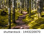 A Walk Through The Backwoods O...