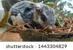 Flying Squirrel In The Forest