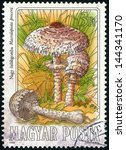 Small photo of HUNGARY - CIRCA 1984: stamp printed in Hungary (Magyar) shows group of parasol mushrooms (macrolepiota procera) from edible mushrooms series, photogravure and engraved, Scott 2877 A759 3fo, circa 1984