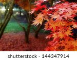 Leaves Turning Red In Autumnal...