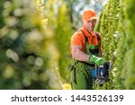 Professional Gardener in His 30s Trimming Green Shrub Wall Pro Equipment in a Garden.  - stock photo