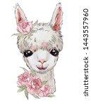 Cute Llama  White Llama With...
