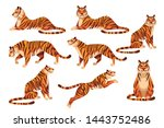 set of adult big tiger wildlife ... | Shutterstock .eps vector #1443752486