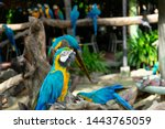 Colorful Of Scarlet Macaws ...