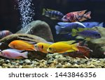 Colorful Of Ornamental Fish ...