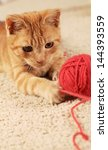 Stock photo little cat playing with wool on the carpet 144393559
