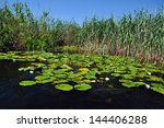 swamp vegetation in the danube... | Shutterstock . vector #144406288