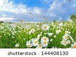 many chamomile flowers on...