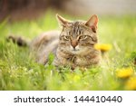 Cat Resting In Spring Grass.