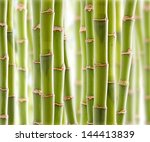 bamboo jungle | Shutterstock . vector #144413839