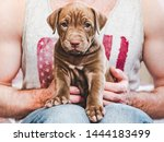 Stock photo young charming puppy in the hands of a caring owner close up white isolated background studio 1444183499