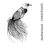 bird of paradise sketch  vector ...   Shutterstock .eps vector #1444191623