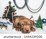 Stock photo young charming puppy and bright christmas decorations close up white isolated background studio 1444239200