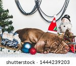 Stock photo young charming puppy and bright christmas decorations close up white isolated background studio 1444239203