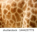 The Body Of The Giraffe Has A...