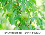 pears on tree | Shutterstock . vector #144454330