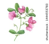 Branch With Mouse Peas Pink ...