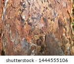 natural old wood background... | Shutterstock . vector #1444555106