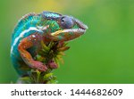 Color Changer Reptile Animal...