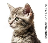 little kitten   portrait | Shutterstock . vector #144475870