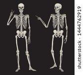 Human Skeletons Posing Isolate...