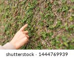 Woman Touch The Moss Wall By...
