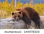 A Grizzly Bear In Alaska Takin...