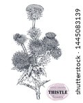 vector hand drawn thistle or... | Shutterstock .eps vector #1445083139