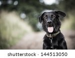 Stock photo dog 144513050